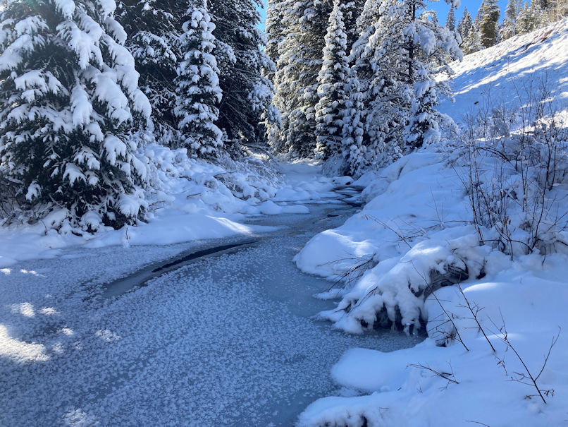 Coal Creek mostly frozen with snow on the surrounding forest, 11Nov2020